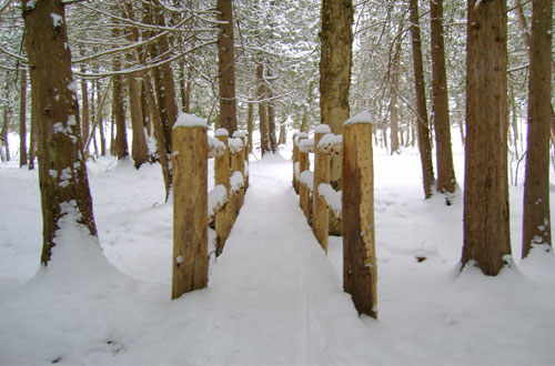 Winter Hiking in Traverse City
