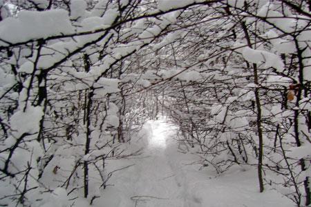 december_hike.jpg